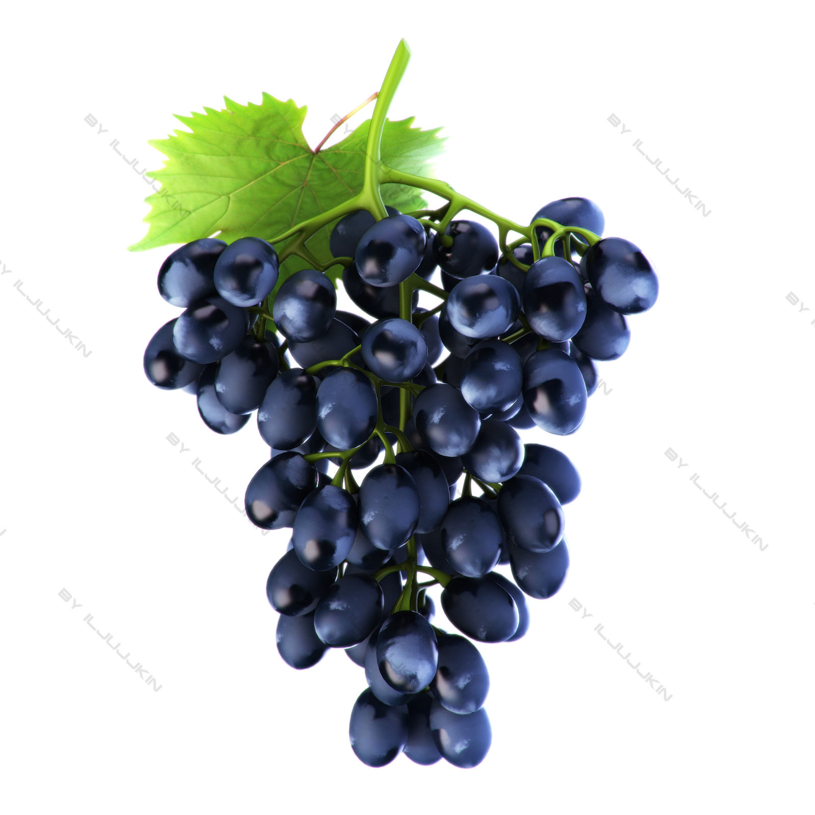 Grapes_blue_01.jpg