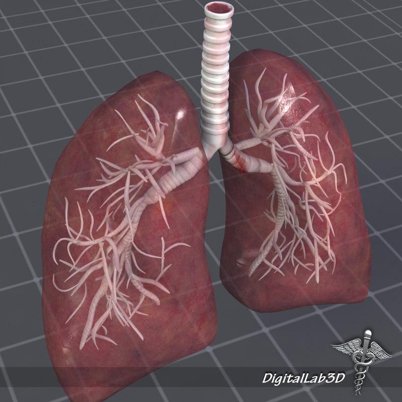 DL3D_LungsD_3.JPG