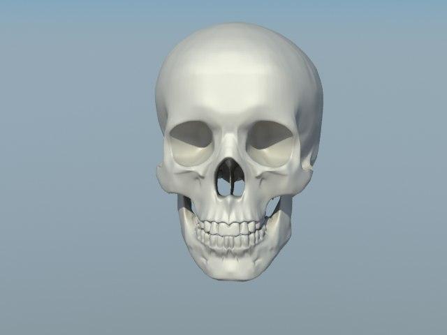 Skull_render_000.jpg
