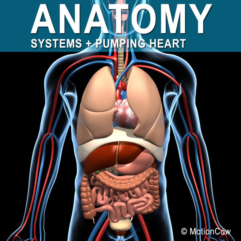 Anatomy_A.jpg