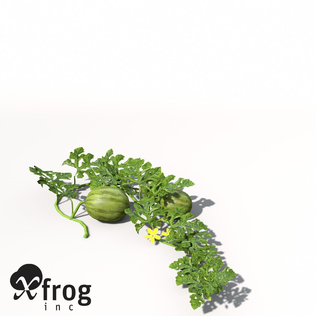XfrogPlants Watermelon