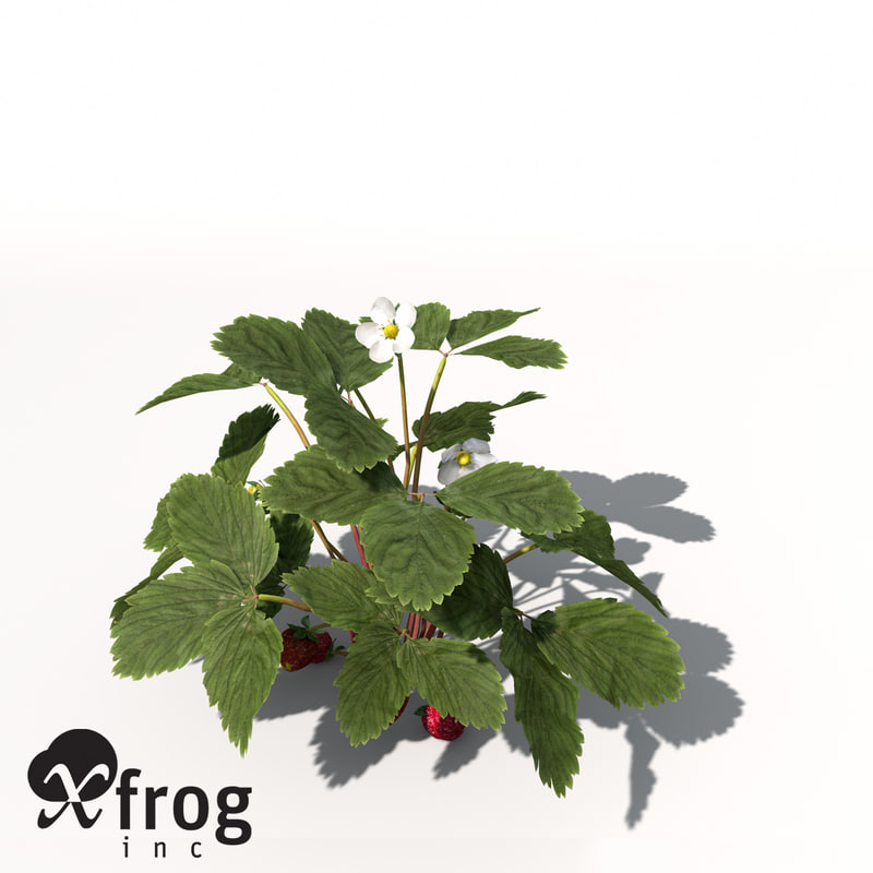 Strawberry Model 3d 3d Xfrogplants Strawberry x