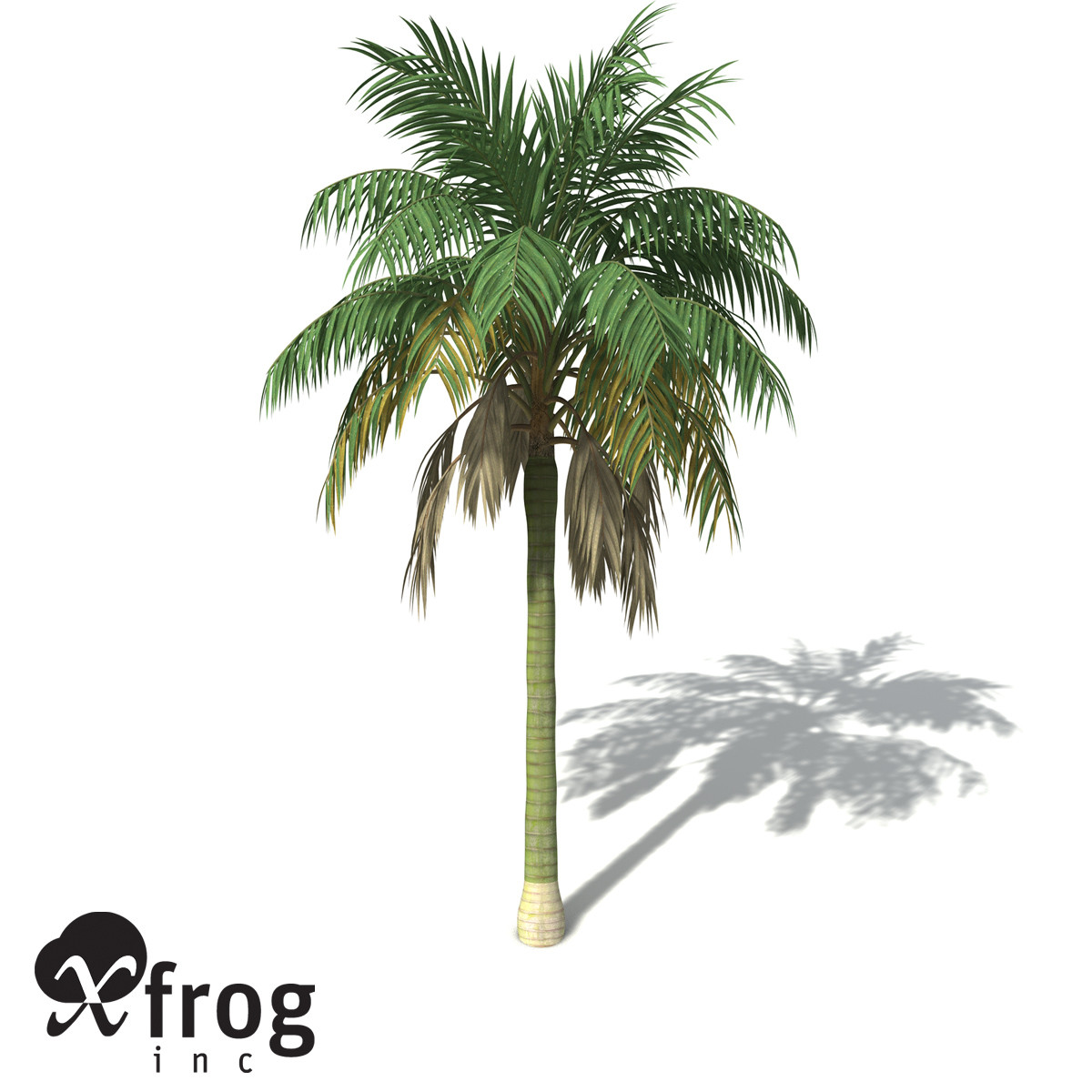 3ds xfrogplants kentia palm