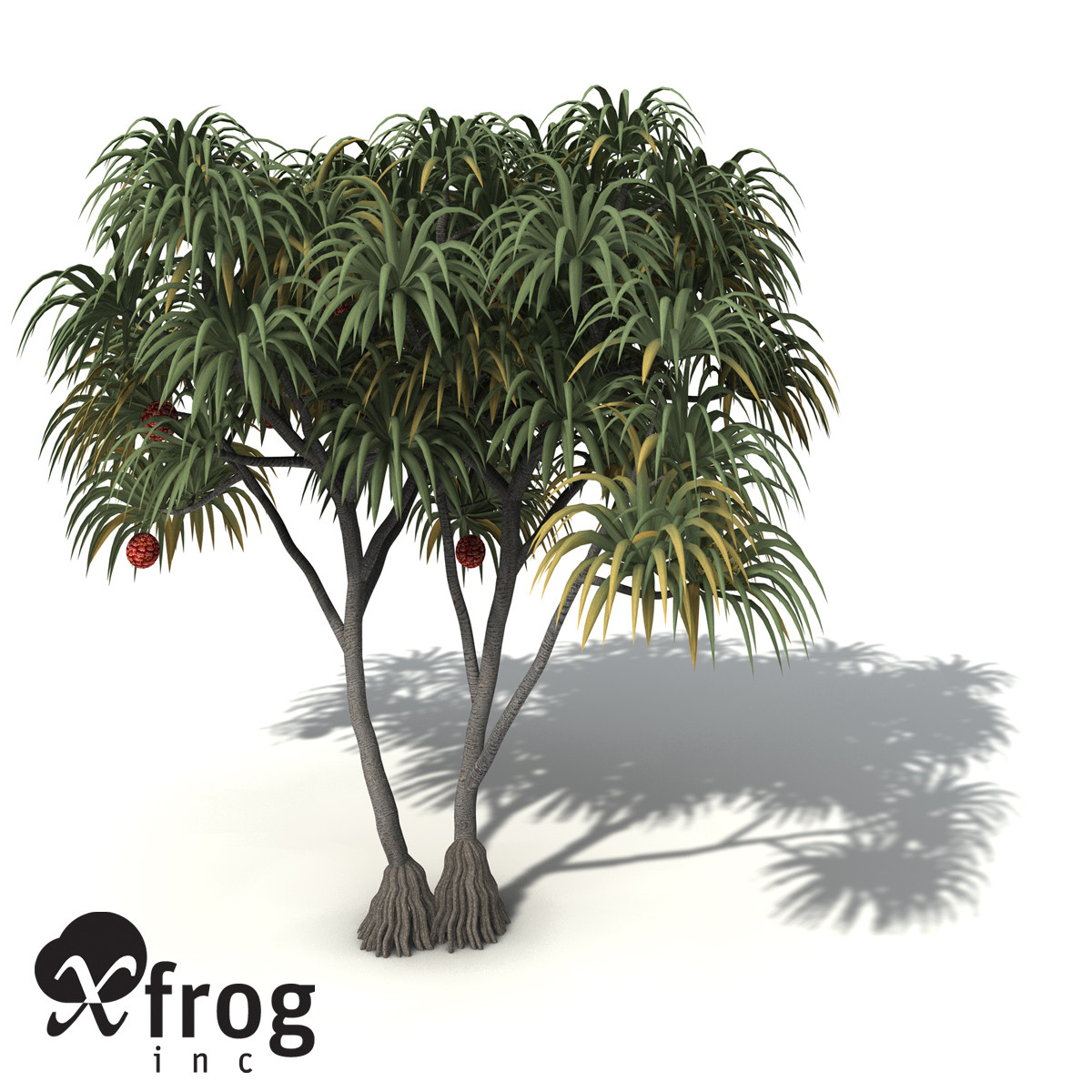 XfrogPlants Coastal Screw Pine
