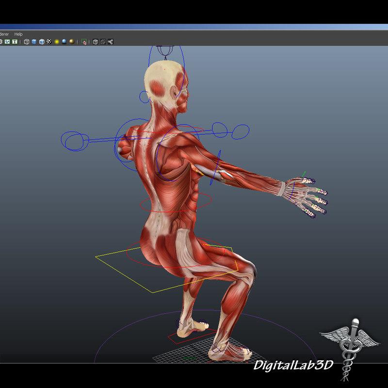 DL3D_FMuscularS_2.jpg