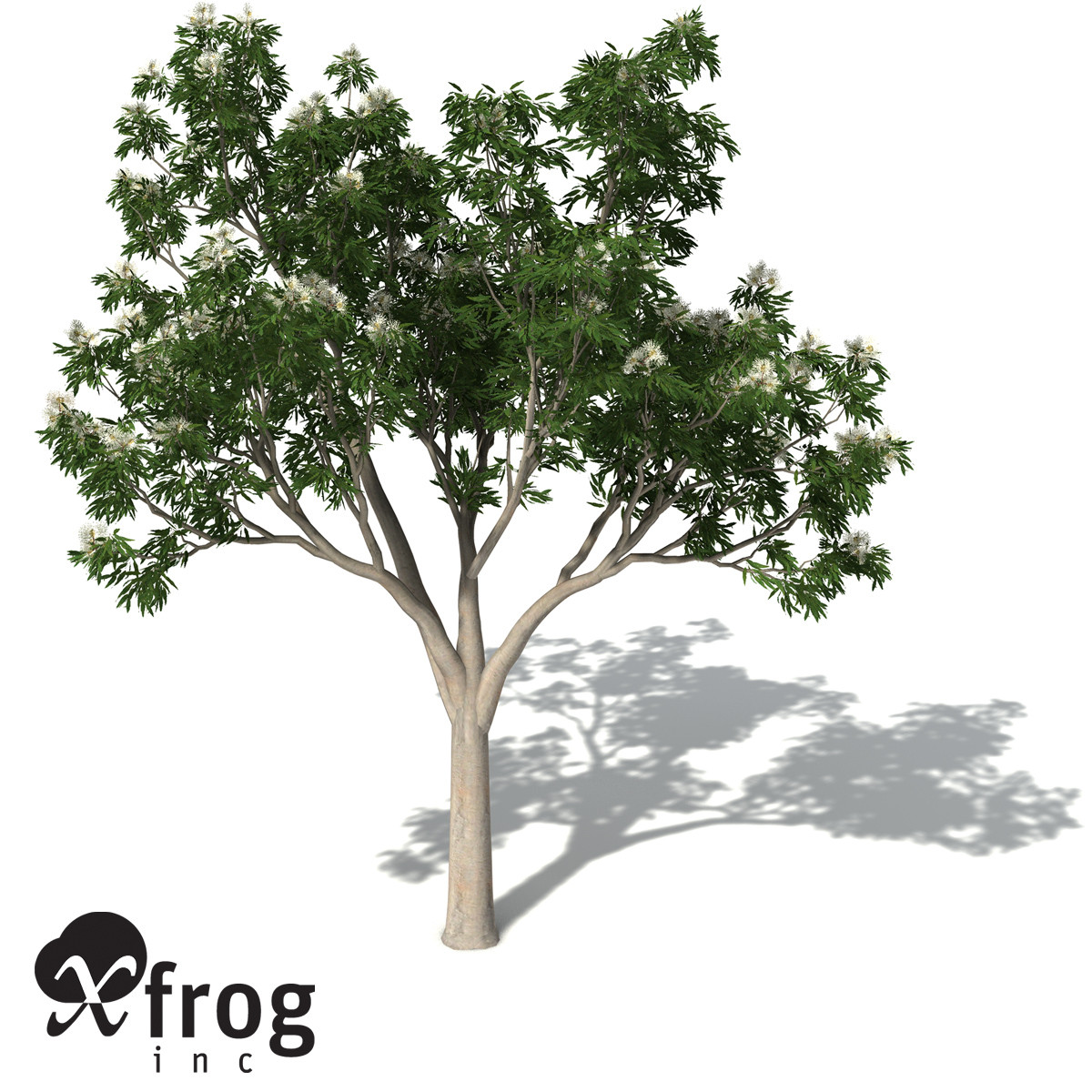 XfrogPlants Ghost Gum