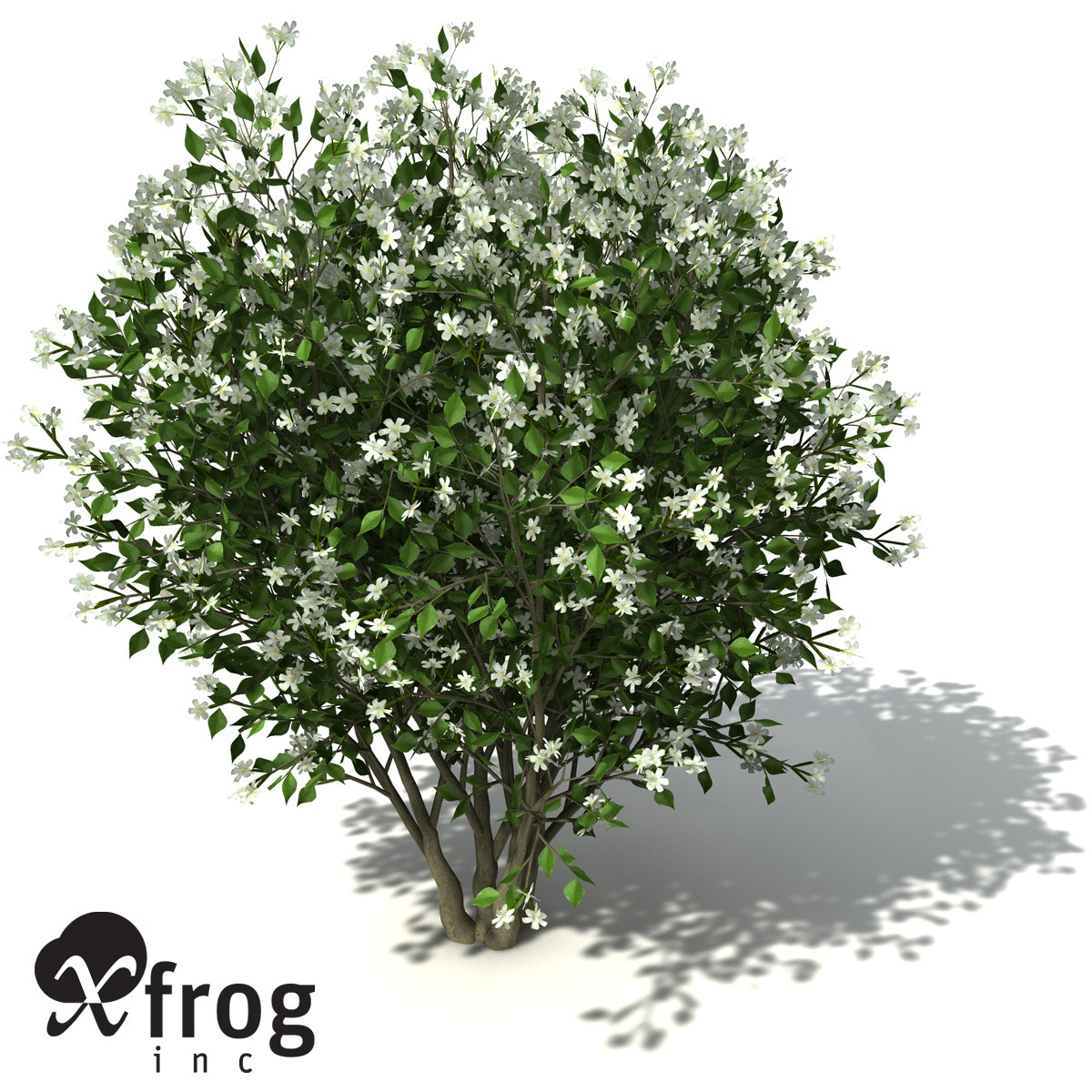 orange jasmine tree shrub 3d model