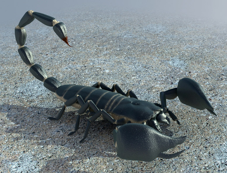 sample01_Scorpion_3d_Model.jpg