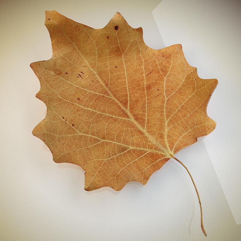 Leaf_poplar_dry_1.jpg