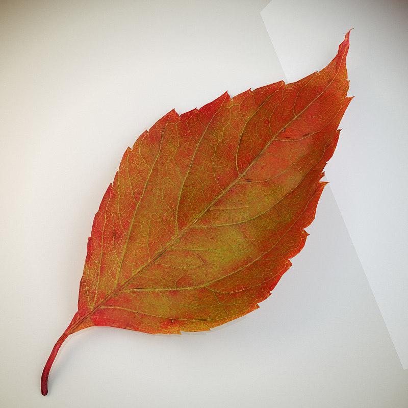 Leaf_red_2.jpg