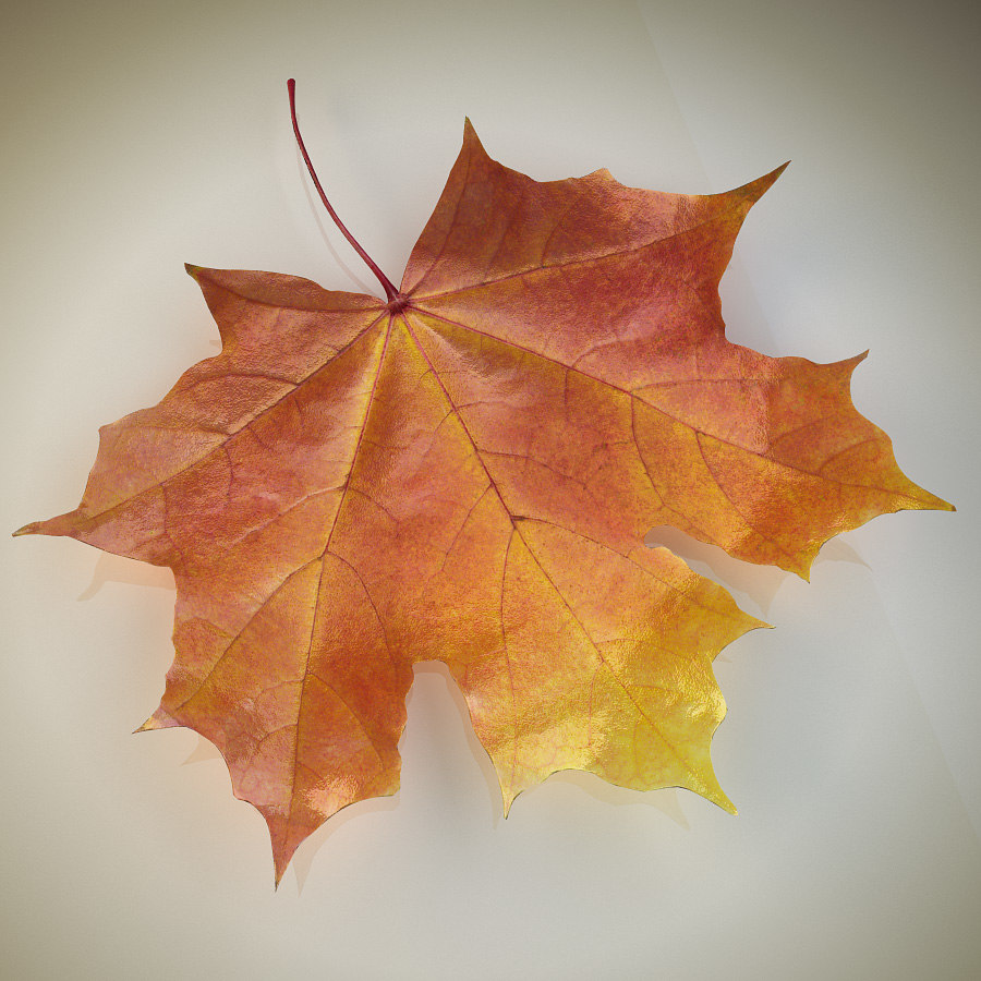 Autumn_maple_leaf_02.jpg