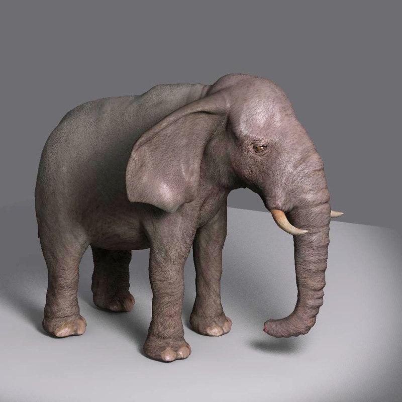 Movie_Elephant_E.jpg