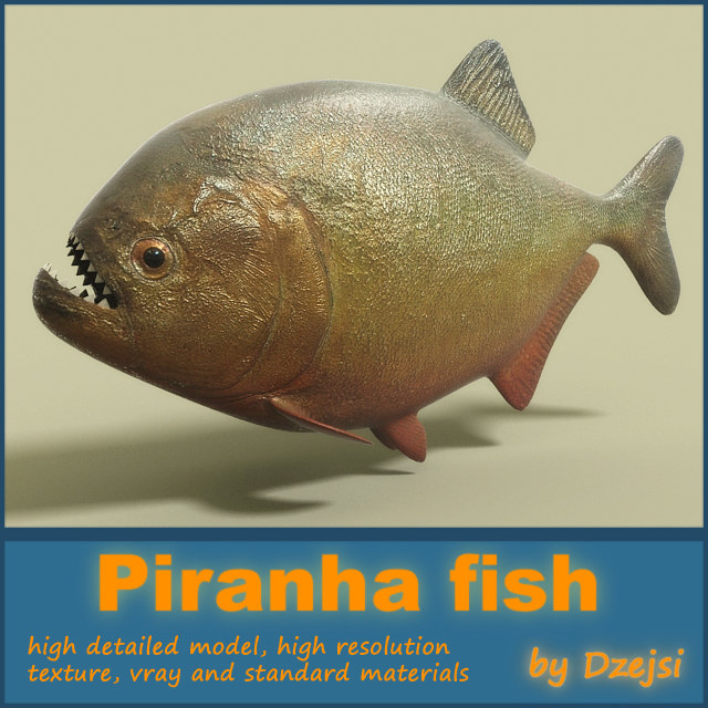 a report on the piranha the notorious killer in the amazon See photos of the black piranha and red-bellied piranha from river monsters, as well as the payara, cuiu-cuiu and amazon river dolphin.