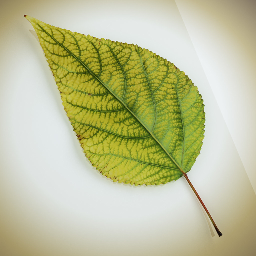 Leaf_yellow_01.jpg