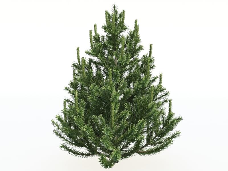 small full pine