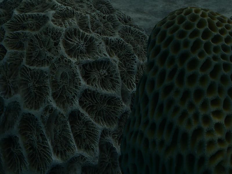 Coral01+02_r2.jpg