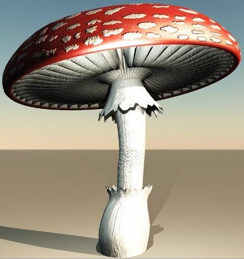 Amanita Muscaria 3D Models