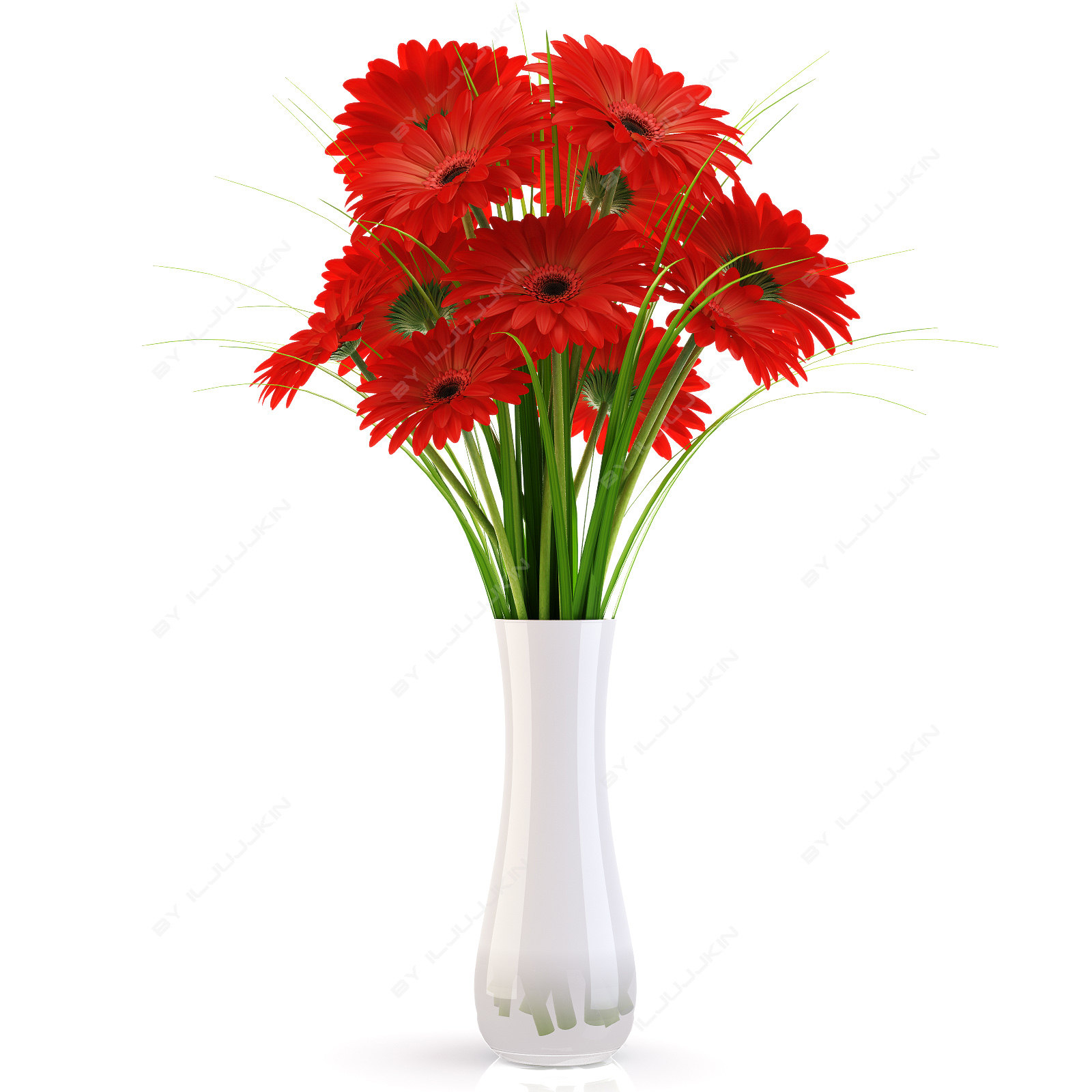 Flowers gerbera red
