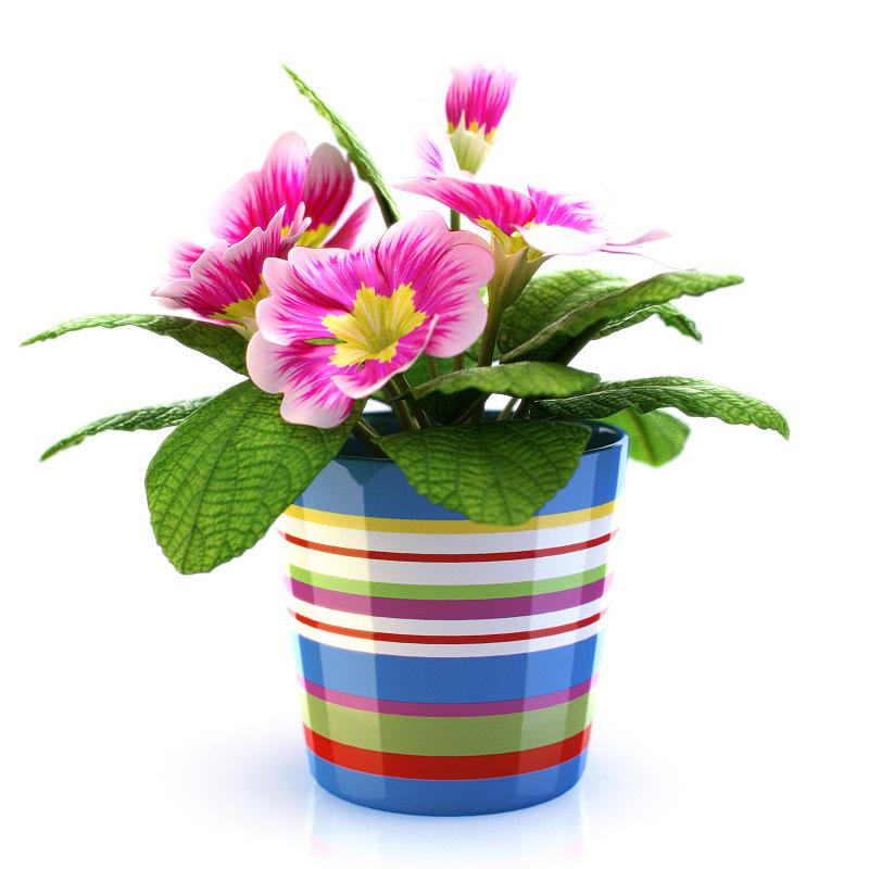 Flower_in_Pot_02.jpg