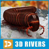 Millipede 3D models