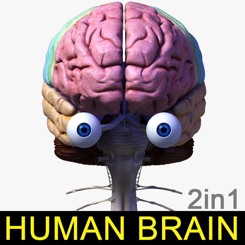 Brain_leo_000.jpg
