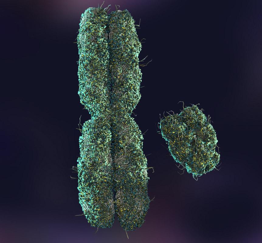 Chromosome Male... Y Chromosome Sperm