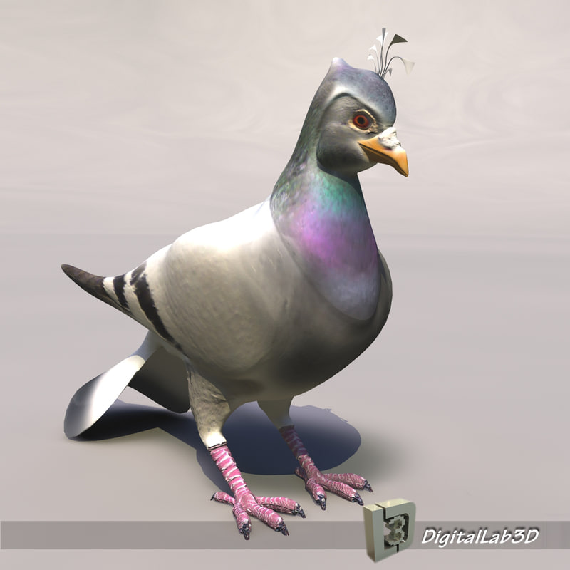 Pigeon_1.JPG