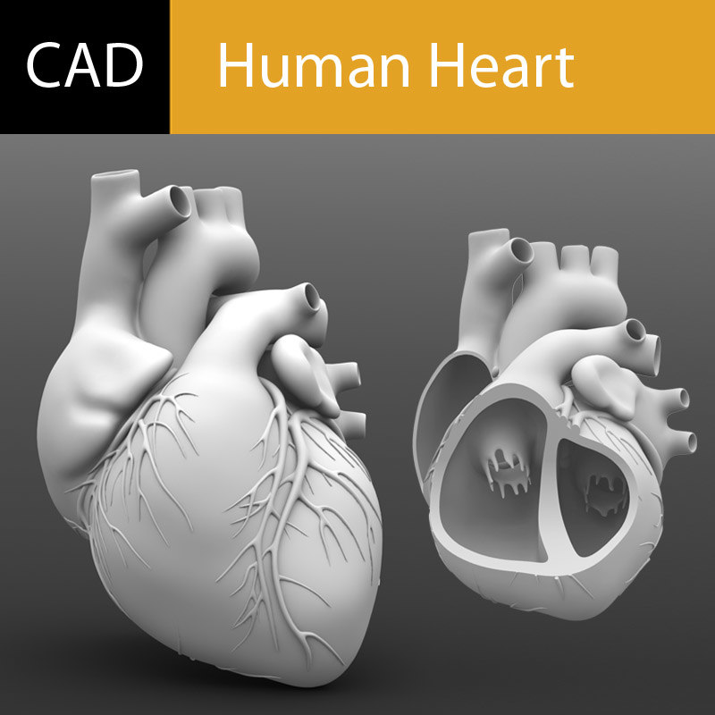 Main Preview Human Heart CAD.jpg