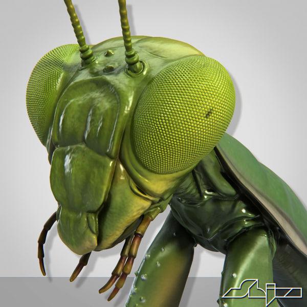 Mantis Religiosa 1 3D Models