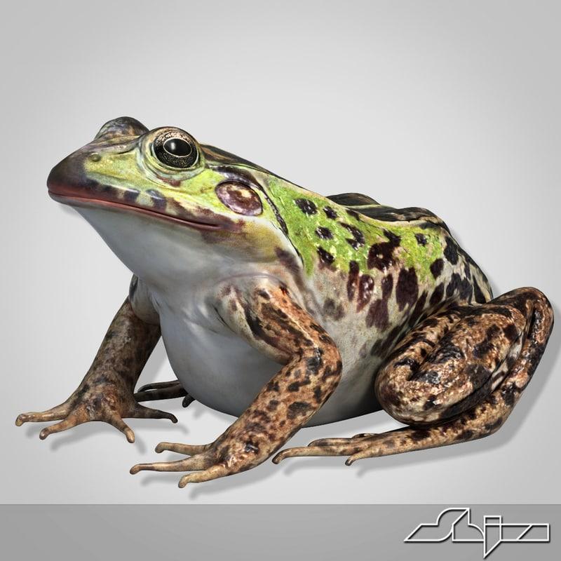 Frog_render-1.jpg