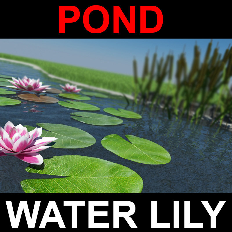 pond_screen.jpg