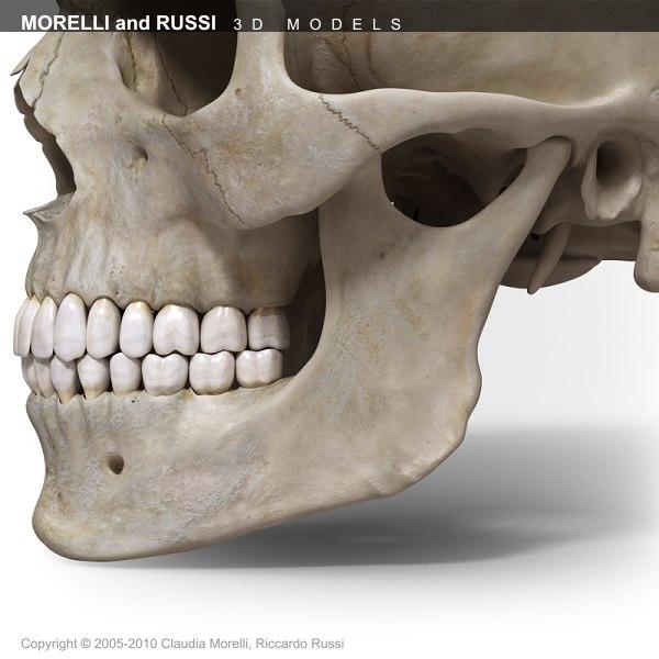 SKULL EXTREME 3D Models