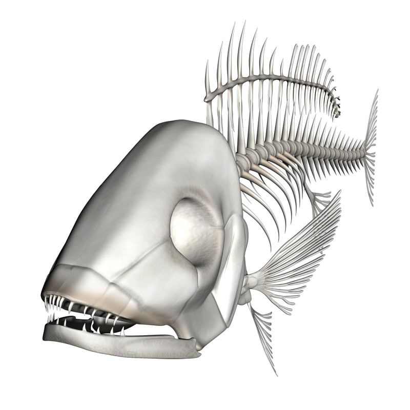 fishskeleton01.jpg