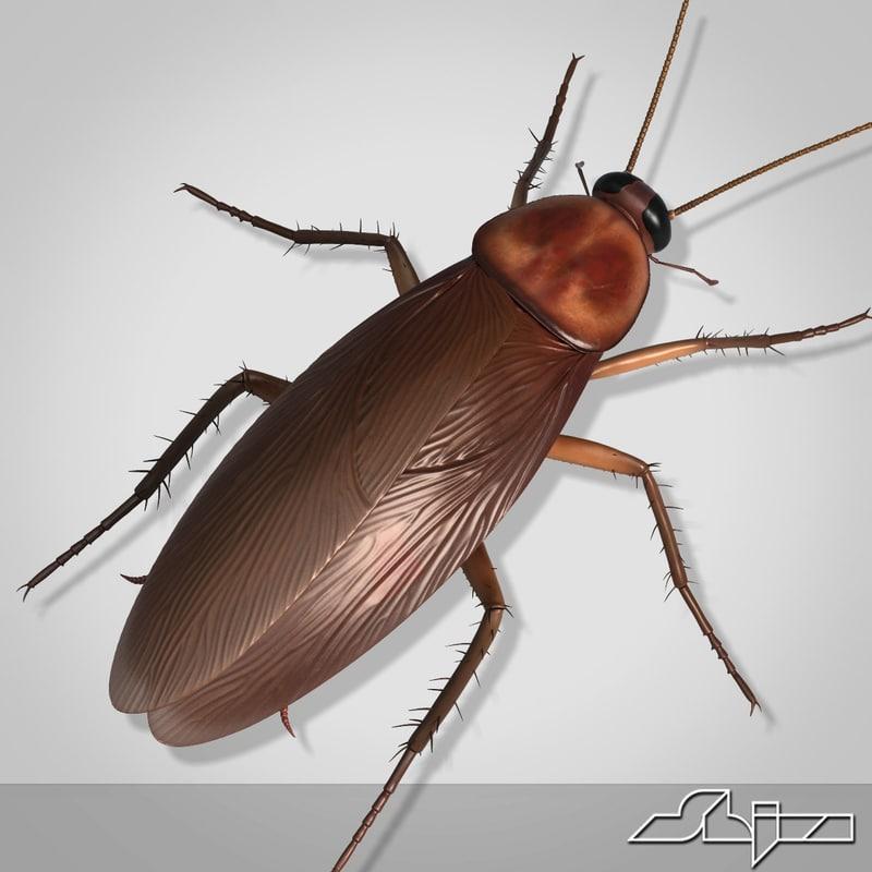 Cockroach2_render-2.jpg