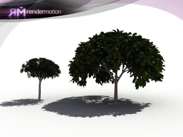 d2 c1 33 magnolia 3d obj