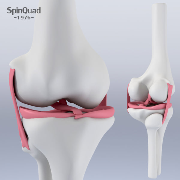 Knee ligaments 3D Models