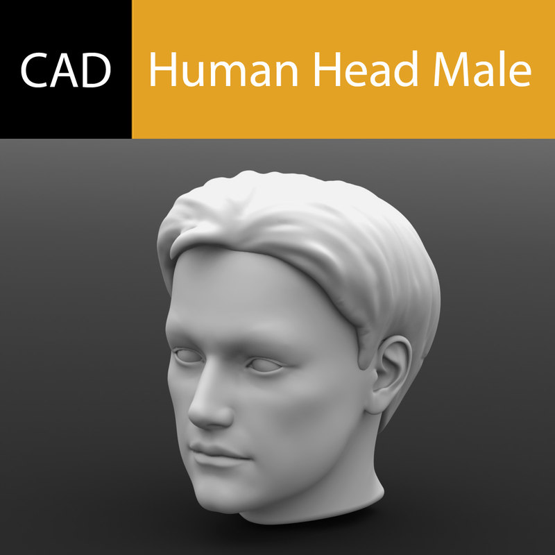Main Preview Human Head Male.jpg