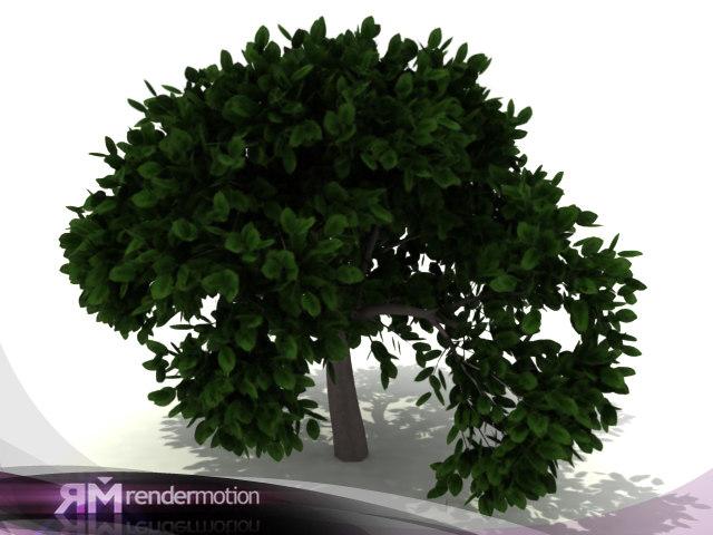 D2.C1.16 Ficus
