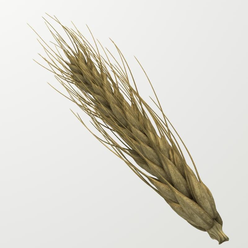 Z_wheat_A.jpg