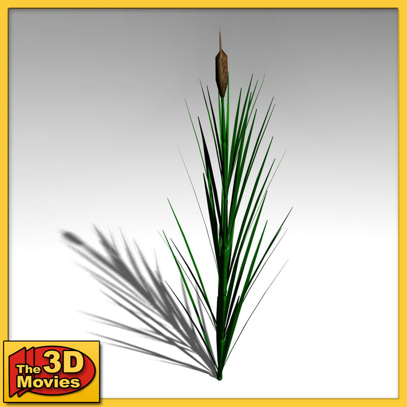 common reed 3d model