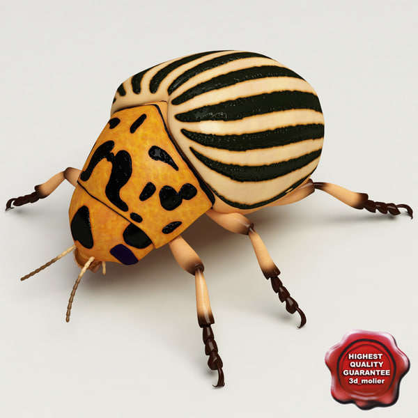 Colorado Potato Beetle 3D Models