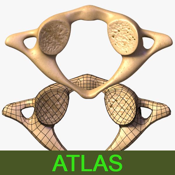 Atlas (vertebra) 3D Models