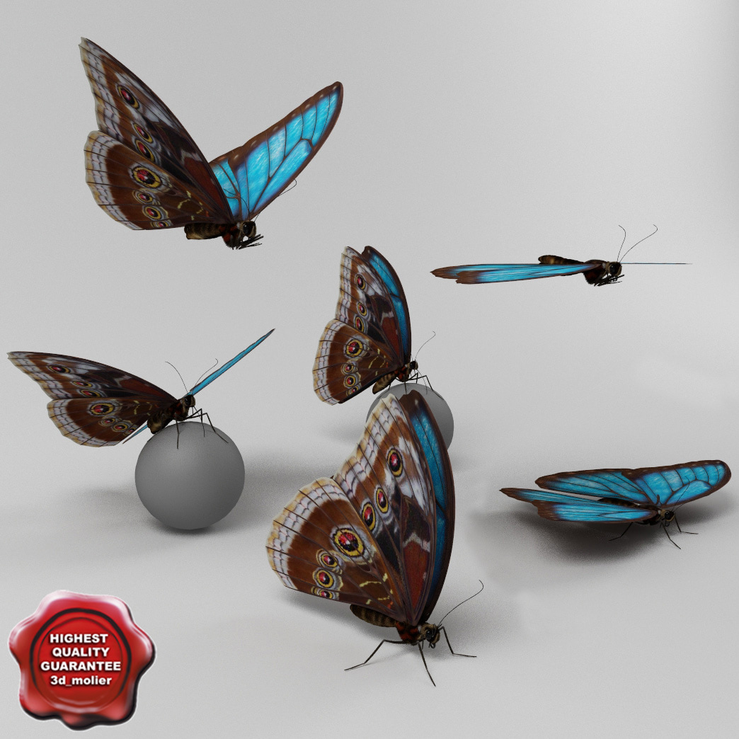 Blue_Morpho_Butterfly_Poses_Collection_00.jpg