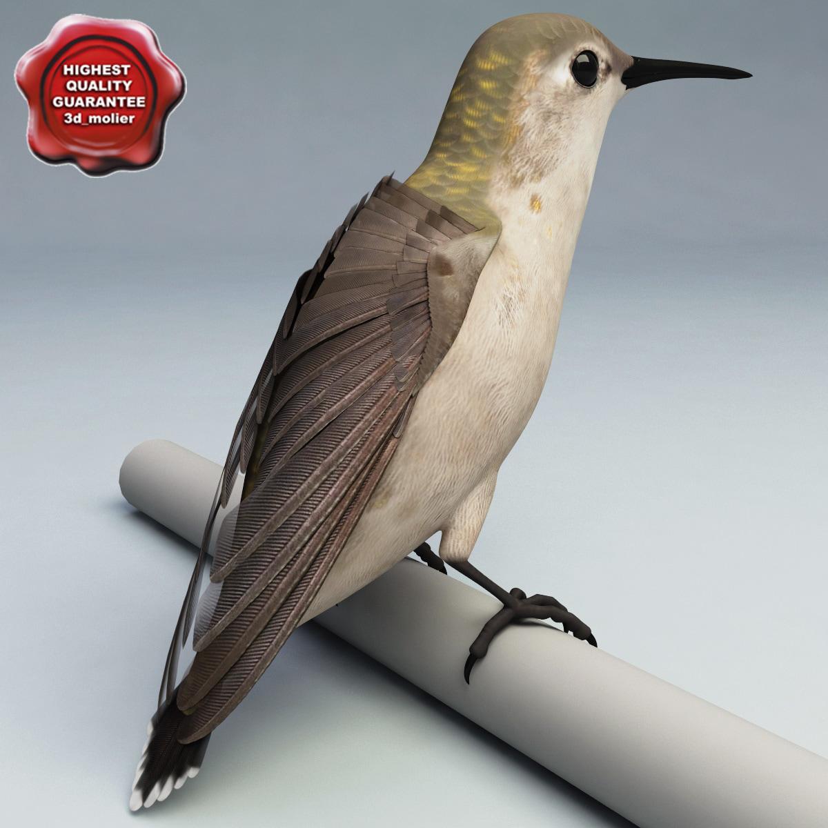 Hummingbird Pose2