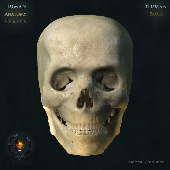 Oormi-Skull-V2-00.jpg