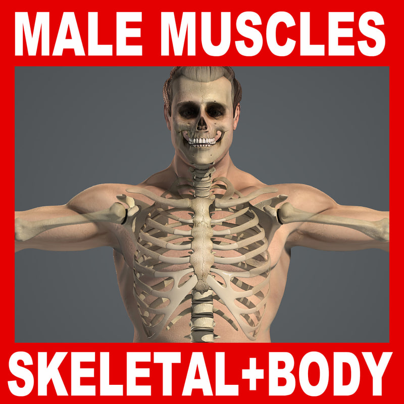Male_Skeletal_Body_Title.jpg