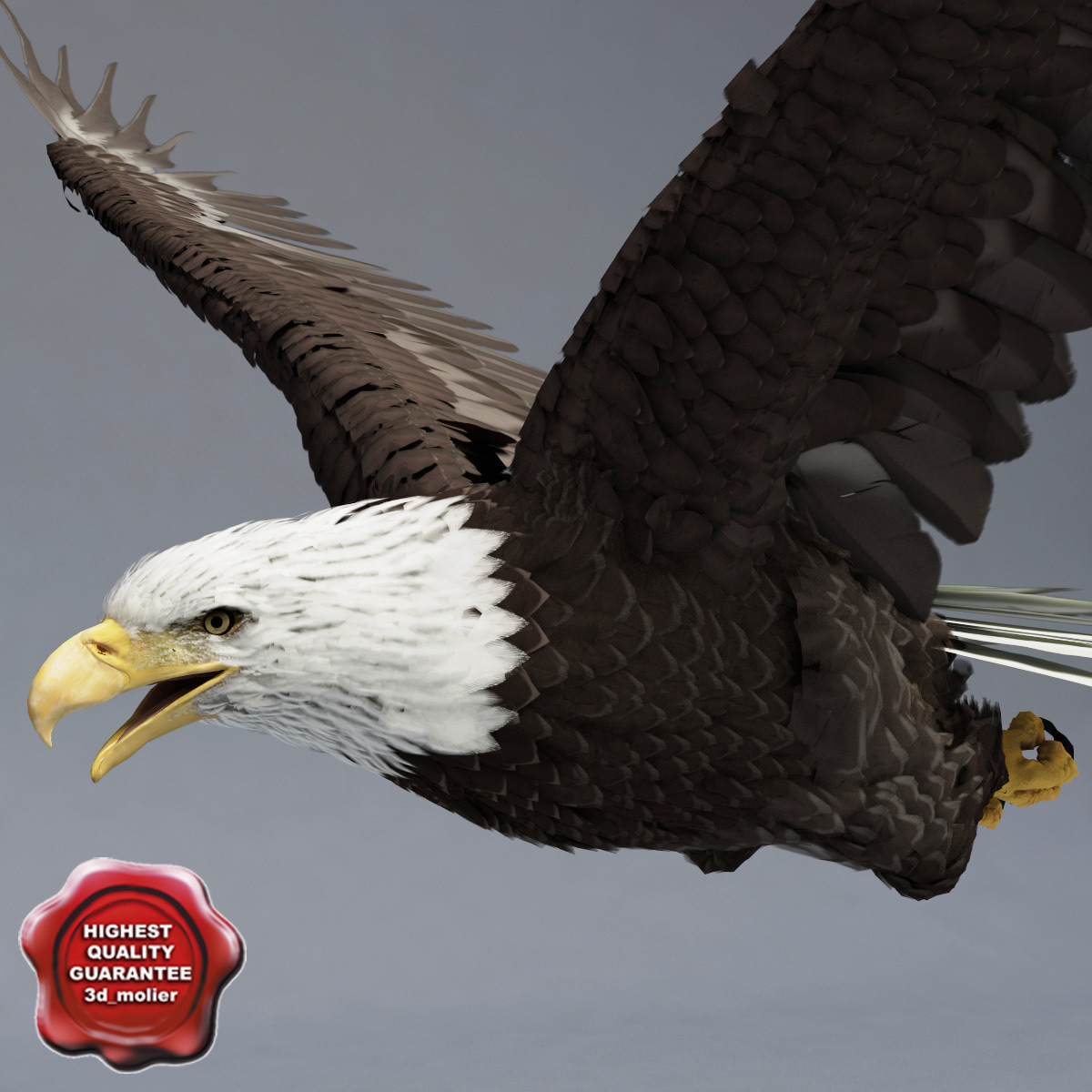 Bald_Eagle_Pose3_00.jpg