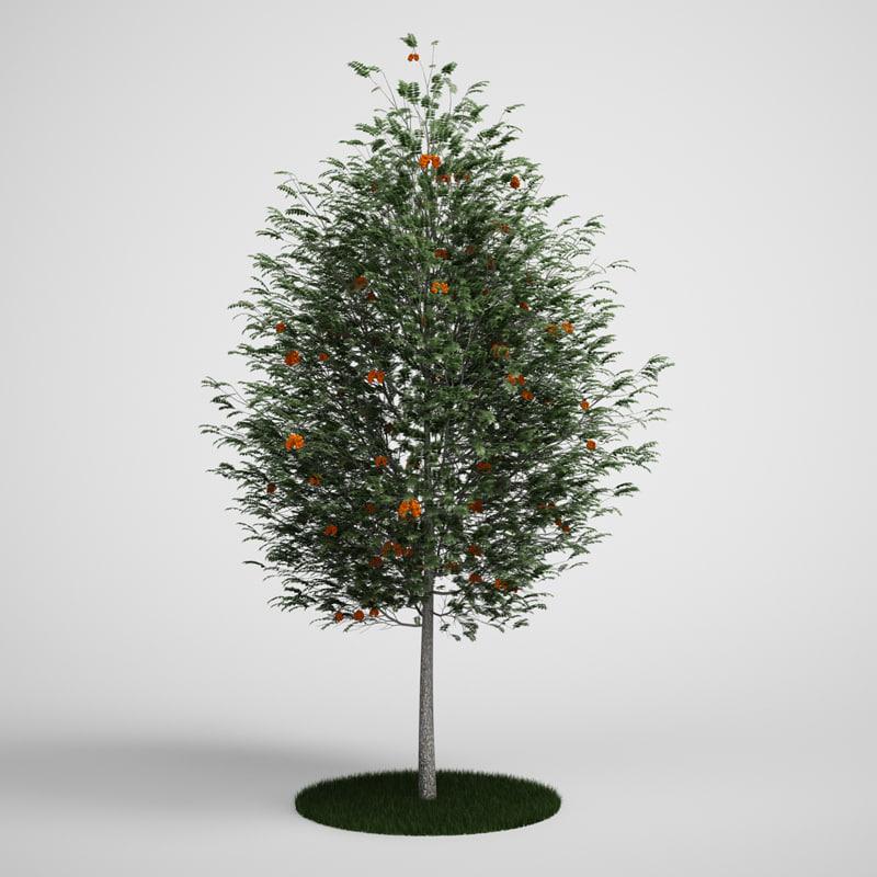 CGAxis Rowan Tree Mountain Ash  17