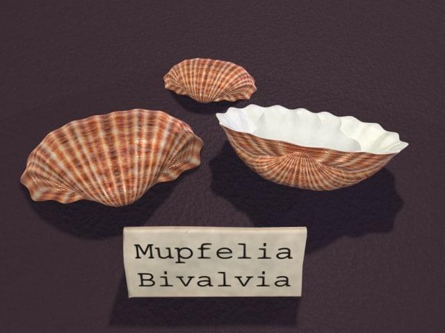 Seashell2.jpg