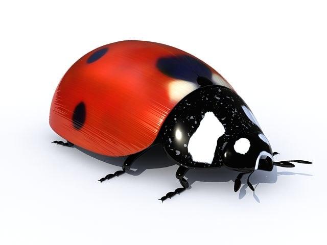 ladybird-01.jpg
